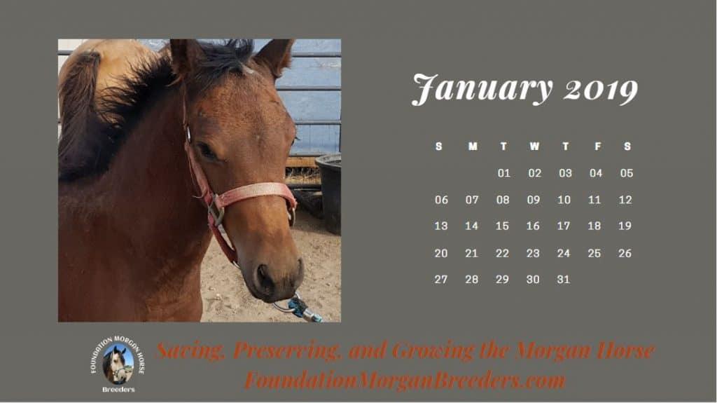 Free Morgan Horse Calendar
