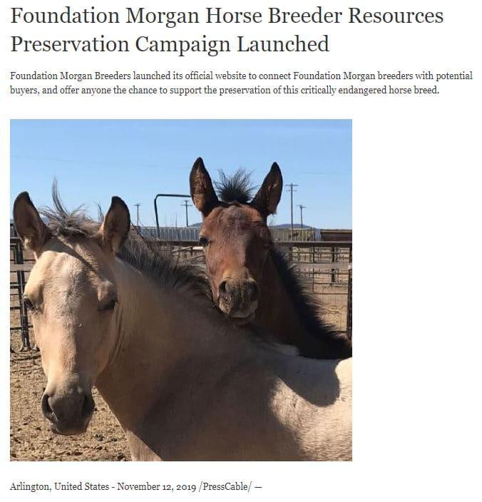 Ask com Foundation Morgan Breeders Announcement